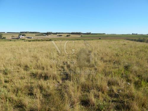campo agricola- ganadero ruta 9