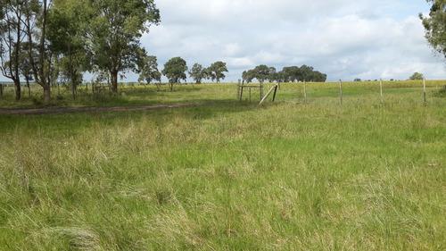 campo completo 3.500 has agri ganaderas, buen casco paysandu