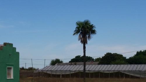 campo con producción de viña y durazno