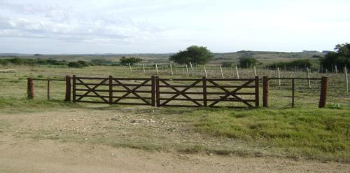 campo con viñedos en maldonado. ref: 5735