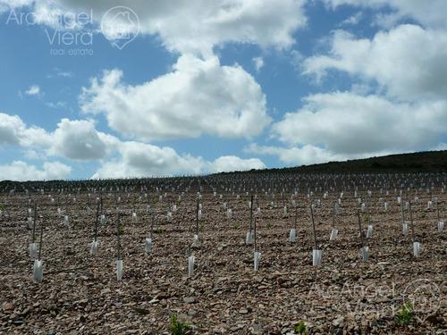 campo de 10 hectareas con viñedo de 2 hectareas- se financia!