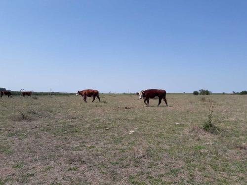 campo de 110 has agrícola ganadero buena ubicación.