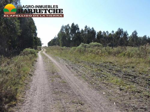 campo de 16 hectareas en sauce
