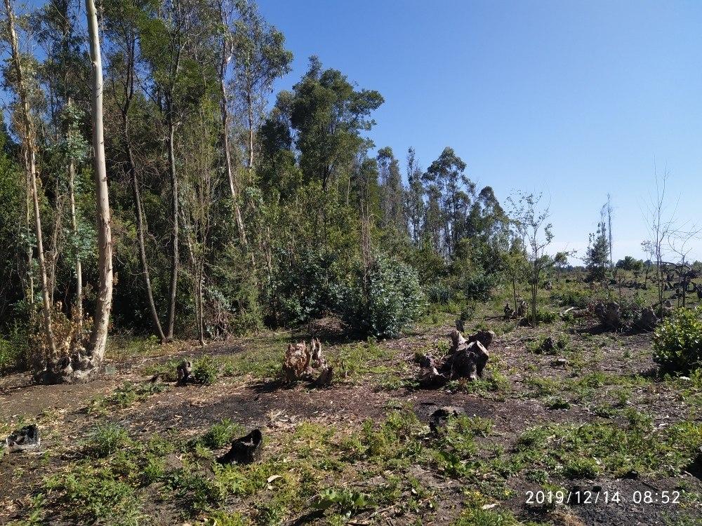 campo de 2 hectáreas con monte de acacias y eucaliptus!