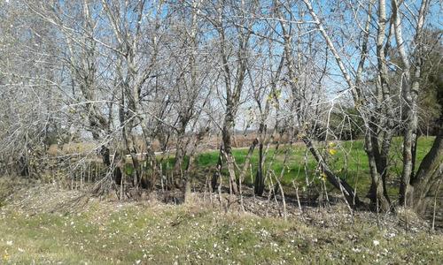 campo  de 6 has km 47 libertad san jose