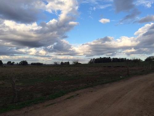 campo de 92 há en rocha a 6 km de la ciudad de rocha
