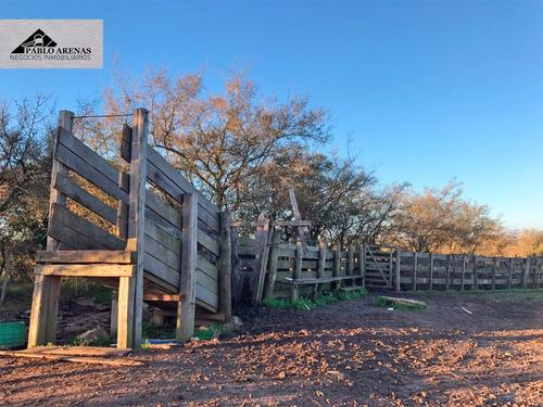 campo en venta en colonia - ganadero - 115 hectáreas #405