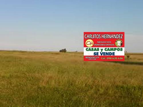 campo estancia  agricola  ganadero 1.000 ha venta soriano