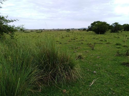 campo excelente 50 hectareas costa de arroyo