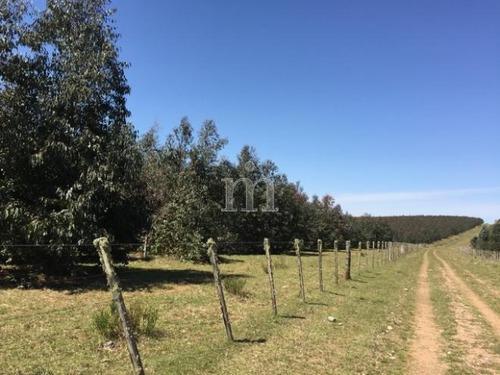 campo forestado