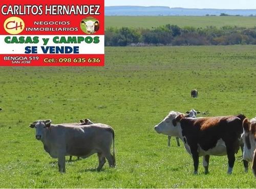 campo ganadero en san jose p venta 240 has u$ 3.900.- / ha