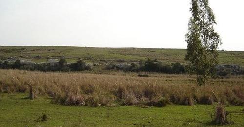 campo ganadero forestal en cerro largo ref.: 2441
