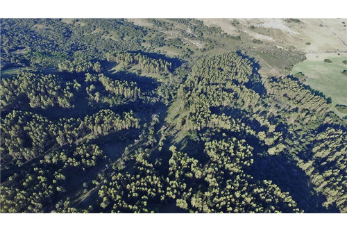 campo ganadero y forestal