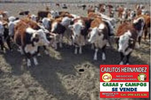 campo prox ingreso 4.000 has en flores p venta u$   / ha