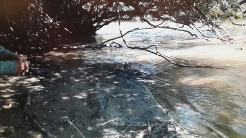 campo venta costa rio san jose jabali pesca ciervo capinc 69