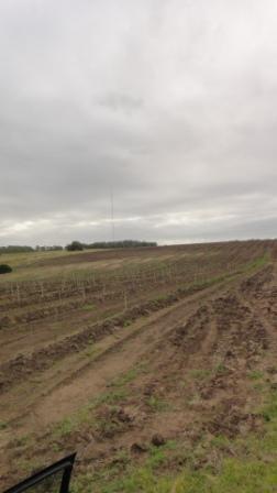 campos agricolas en el departamento de colonia