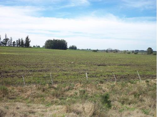 canelones- lavalleja 105 has agricolas