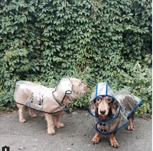 capa pilot de lluvia para perros razas pequeñas! impermeable