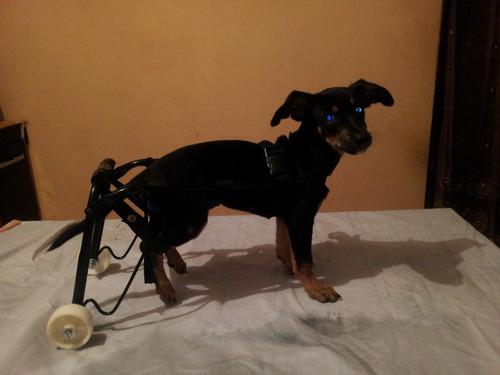 carrito andador para perros y gatos