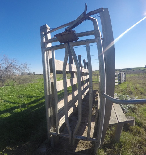 cepo para ganado