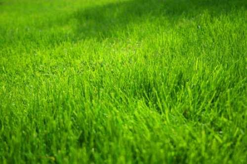 C sped natural en alfombras producci n propia 60 00 - Cesped natural ...
