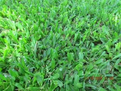 cesped - pasto - jardines - venta y colocación