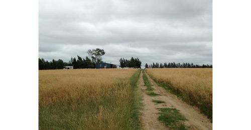 chacra agrícola  el talón ref.: 3744