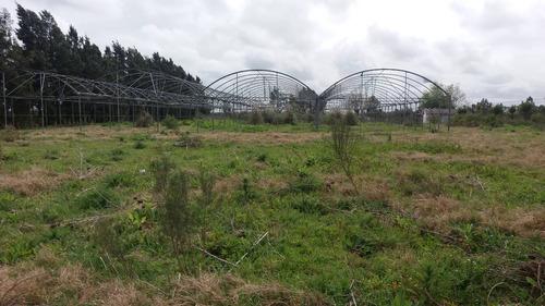 chacra de 3,3 hectáreas en cuchilla pereira