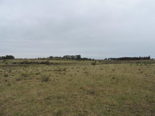 chacra en sauce 20 hectáreas