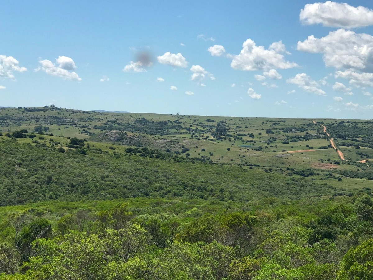 chacra, oasis en las sierras. flora, piedra, vida silvestre.