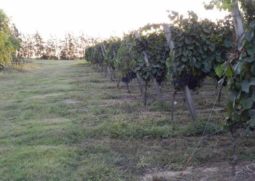 chacra vitivinícola en montevideo