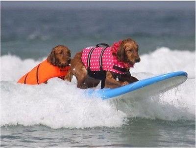 chaleco salvavidas canino. perro acuático oferta