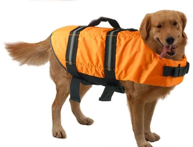 Resultado de imagen para perros ropa