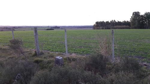 chalet nuevo cn campo agrico 80 ha u$ 7.900. ha pos financi