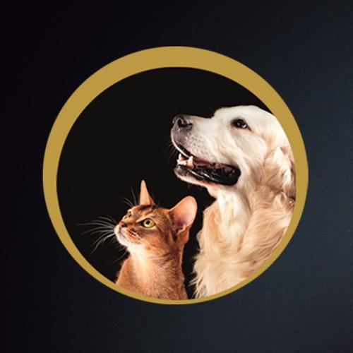 collar para gato animal planet