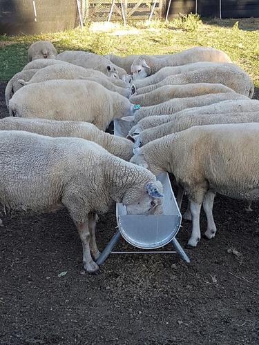 comedero, bebedero para ganado