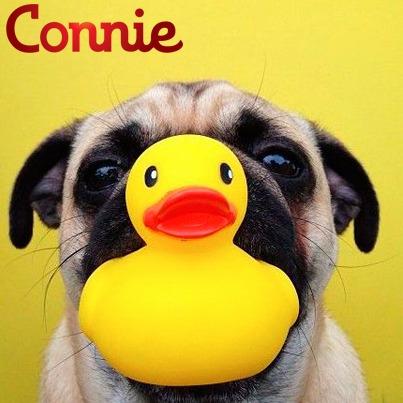 connie premium cachorros x 8 kilos + envio gratis en paysand