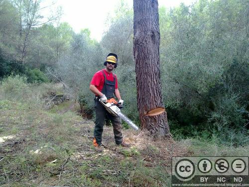 corte de pasto poda de arboles limpieza terrenos escombros