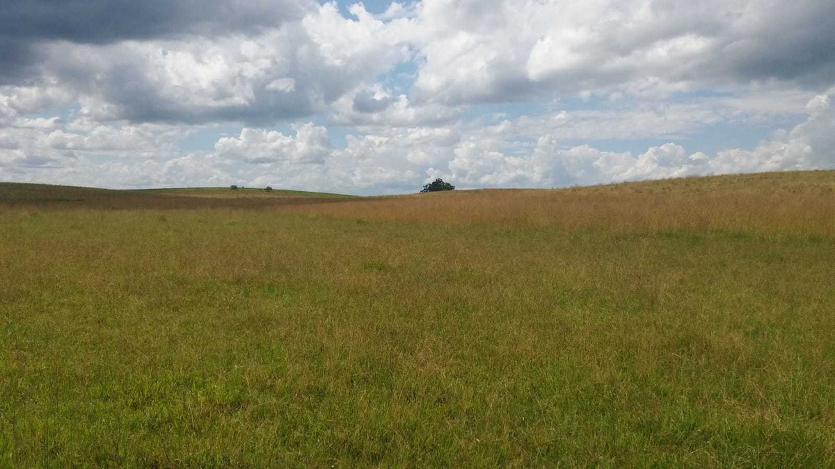 descripción del campo.