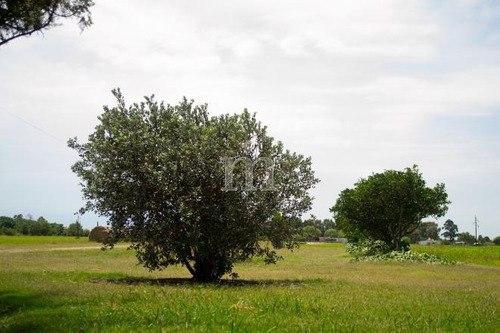 en entorno de haras y quintas