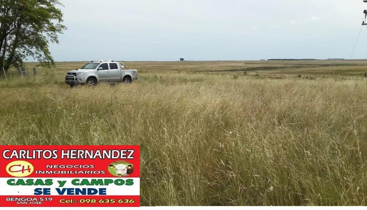 en paysandu necesitamos campos p arrendar se ofrece garantia