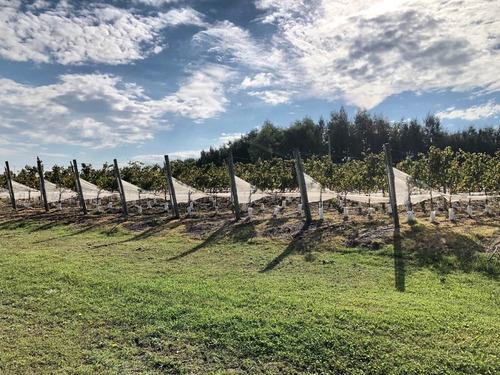 espectacular terreno en viñedos de la tahona
