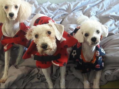 esquilas caninas