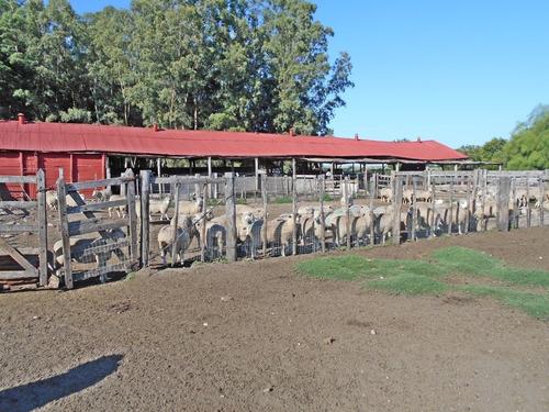 establ. agrícola/ganadero en canelones