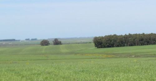 estancia ganadero - agrícola  monte jazmín ref.: 1454