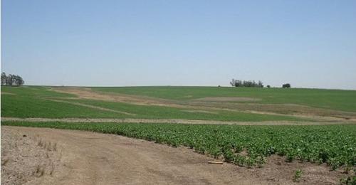 estancita agrícola en río negro ref.: 1412