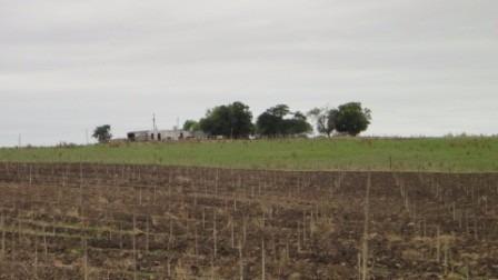 excelente campo de 30 hás a 12 km de colonia del sacramento