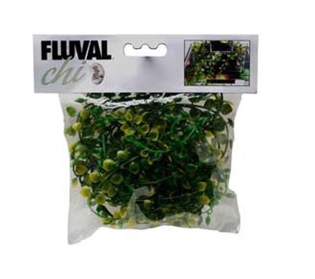 Fluvial Chi Plantas Para Acuario Terrario 12000 En Mercado Libre - Terrario-para-plantas