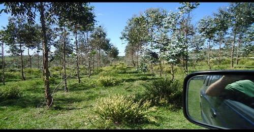 forestación  jeerelang ref.: 1528