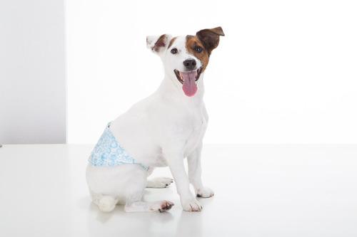 fralda dog's care cães machos 24 unidades - p